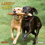 Lucky Dogs - 2016 Calendar Calendars
