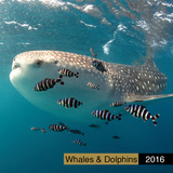 Whales and Dolphins - 2016 Calendar Calendars