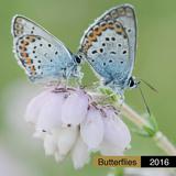 Butterflies - 2016 Calendar Calendars