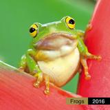 Frogs - 2016 Calendar Kalendere