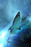 Shark in Water Fotografie-Druck von Mike Aguilera