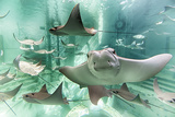 Cownose Rays Photographic Print by Mike Aguilera