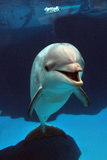 Bottlenose Dolphin Photographic Print by Mike Aguilera