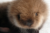 Baby Otter Photographic Print
