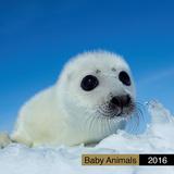 Baby Animals - 2016 Calendar Calendriers