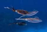 Squid in the Ocean Photographic Print