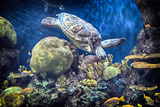 Sea Turtle and Reef Photographic Print by Mike Aguilera