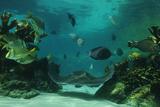 Stingray in Aquarium Photographic Print
