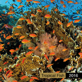 Tropical Fish - 2016 Calendar Calendars