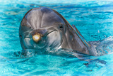 Dolphin Swimming Photographic Print by Mike Aguilera