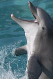 Bottlenose Dolphin Fotografisk trykk av Mike Aguilera