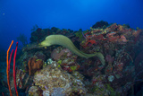 Moray Eel and Coral Reef Photographic Print