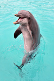 Happy Dolphin Photographic Print