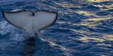 Killer Whale Tail Splash Photographic Print