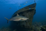 Shark and Sunken Ship Photographic Print
