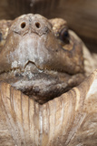 Tortoise Closeup Photographic Print by Mike Aguilera