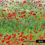 Wild Flowers - 2016 Calendar Calendriers