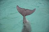 Dolphin Tail Fotografisk tryk