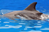 Baby and Mother Dolphin Photographic Print