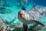 Bottlenose Dolphins Fotografisk tryk af Mike Aguilera