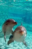 Bottlenose Dolphins Fotografisk trykk av Mike Aguilera