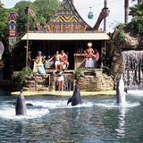 Vintage Dolphin Show Fotografisk tryk