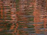 Flamingo Reflection on Water Photographic Print