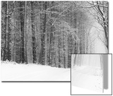 Forest in Winter Prints by Doug Chinnery