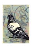 Rock Pigeon Giclee Print by  Urban Soule
