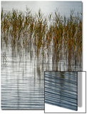 Reeds Prints by Doug Chinnery