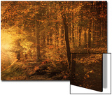 Into Autumn Prints by Philippe Sainte-Laudy