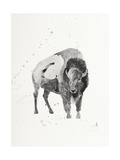 Watercolor Buffalo Giclee Print by Ben Gordon