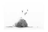 Birds over Sea Stack Giclee Print by Kyle Goldie