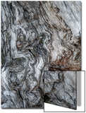 Ancient Bark Art by Doug Chinnery