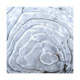 Ice Swirl 2 Giclee Print by Karen Ussery