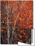 Orange Patch Prints by Philippe Sainte-Laudy