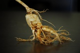 Ginseng Is Any One of Eleven Species of Slow-Growing Perennial Plants with Fleshy Roots Photo by Frank May