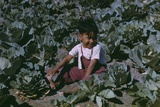 Child of a Migratory Farm Laborer in a Cabbage Garden, Texas, Jan. 1942 Photo by Arthur Rothstein