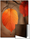 Symbol of Autumn Poster by Philippe Sainte-Laudy