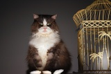 Cat Sitting Next to Empty Birdcage Photo