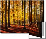 Walk Between Trees Poster af Philippe Sainte-Laudy