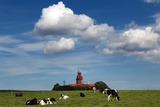 Cows Graze in Front of a Lighthouse in Bastorf, Germany Photo by Bernd Wuestneck