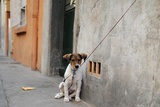 A Beagle Tied Up Outside in Perpignan, France Photo by Frank May
