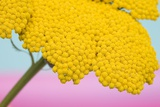 Close-Up of Yellow Flower Affiches
