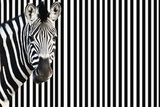 Zebra on Striped Background, Looking at Camera Prints