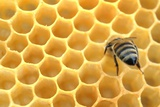 A Bee in a Beehive, 2012 Photo