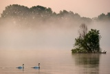 The River Oder in the Fog, with Two Swans Photo