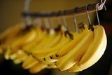 Organic, Bananas Photo