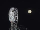 Owl Perching on Tree Foto