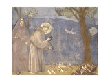 St. Francis Preaching to the Birds Posters by  Giotto